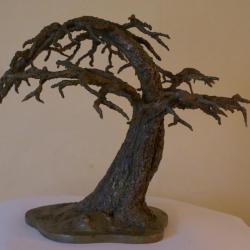 L'arbre cocon